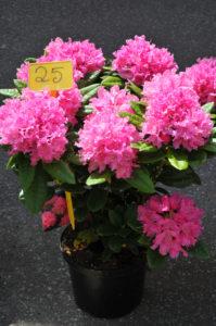 Marché aux fleurs, à la volaille et aux produits du terroir